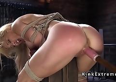 Hogtied suspension for big tits blonde